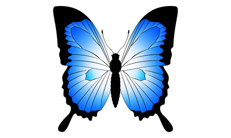Illustration of a Ulysses butterfly