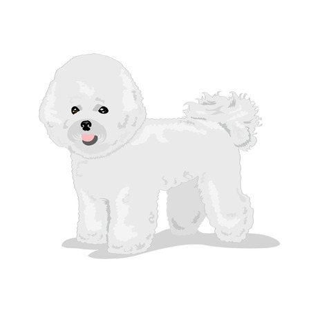 perro mullido Bichon Ilustración de vector