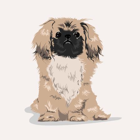 pekingese dog at white background Illustration