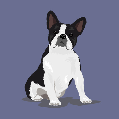 french bulldog at violet background Illustration