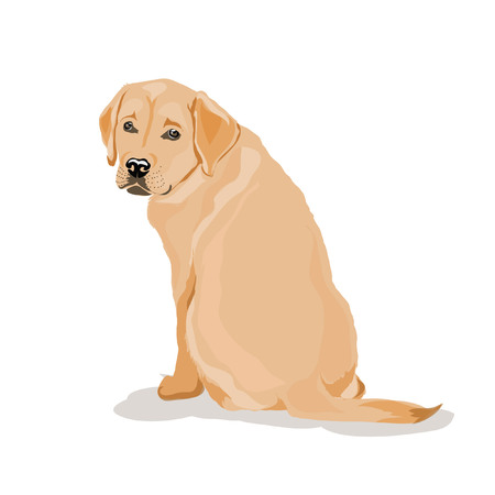labrador at white background Illustration