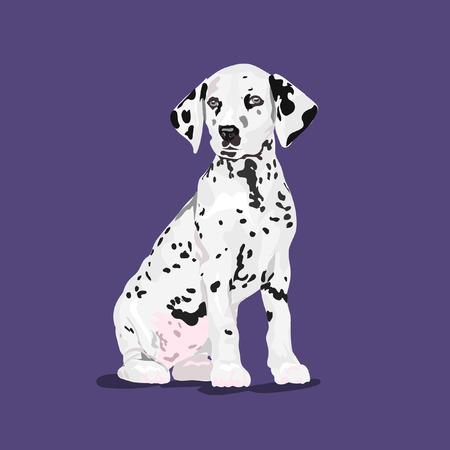 dalmatian dog sit