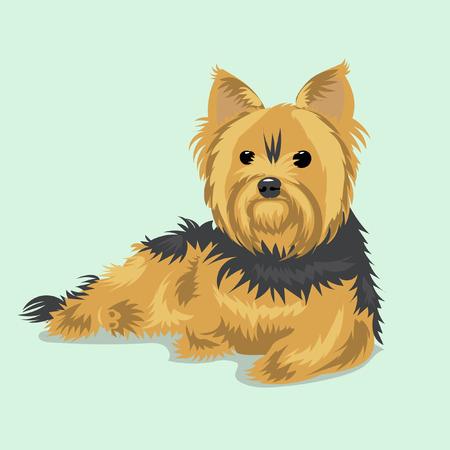 Yorkshire Terrier chien Banque d'images - 67063872