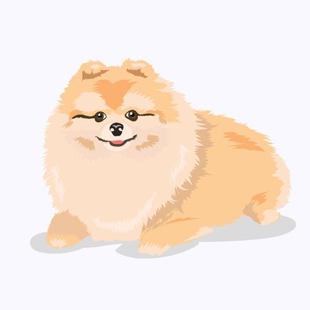 ポメラニアン犬を産む  イラスト・ベクター素材