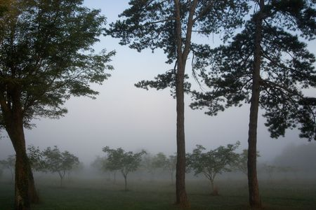 eerie: Eerie Foggy Country View