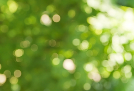 background in spring green colors, bokeh diffuse effect Stock Photo