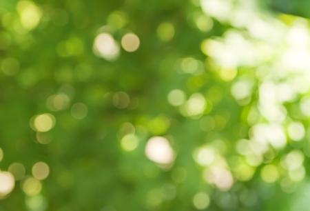 naturaleza: de fondo en colores primaverales verdes, el efecto bokeh difusa Foto de archivo