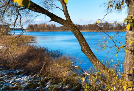 overgrown lake with trees on a sunny day photo