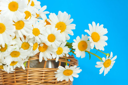 bouquet of daisies in a wicker basket on a blue background photo