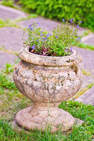 lobelia: lobelia flowers in stone vase in the garden