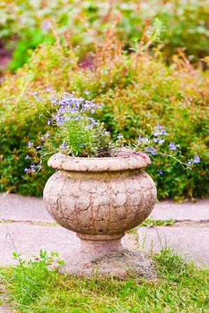 lobelia: blue lobelia flowers in stone vase in the garden