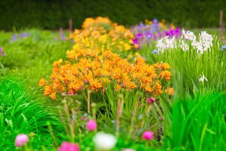 flowerbeds: lush flowerbeds daylilies, irises and other flowers in the garden Stock Photo