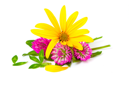 Flowers of clover and Jerusalem artichoke on a white background