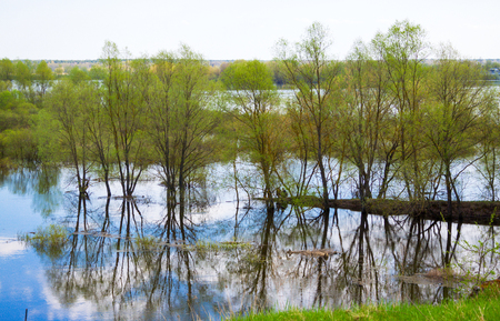 Trees standing in the water, spring flooding