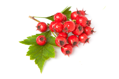 Juicy berries of hawthorn with leaves on white background Stock Photo