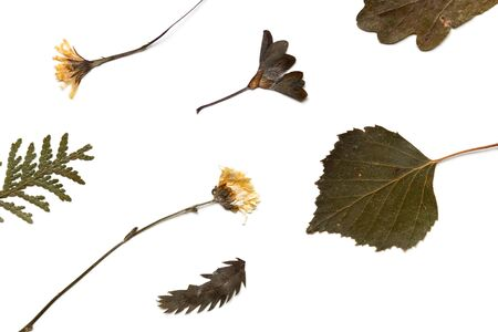 Dried leaves and flowers other plants. Herbarium on a white background, top view