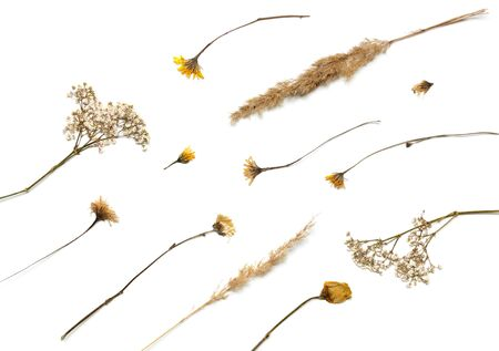 Flat background lined from dry plants. Autumn herbarium of leaves and blades of grass. Green Design Elements Standard-Bild