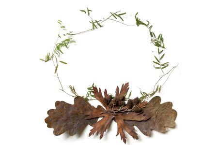 Round frame lined with dry plants. Autumn herbarium of leaves and blades of grass. Elements for eco design