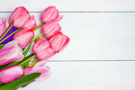 Bouquet of pink tulips with purple ribbon on white background