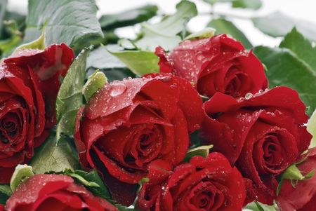 betroth: Red Roses