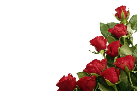 thorns and roses: Red Roses