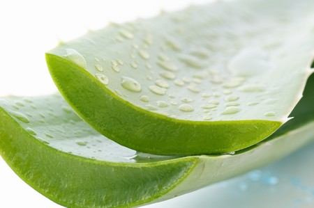 Aloe Vera Leaves with Water Drops Stock Photo - 7725419