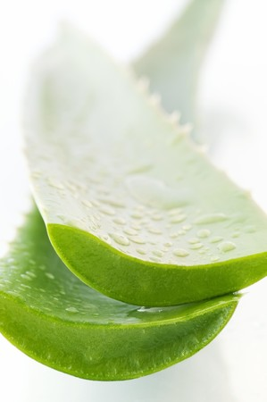 acemannan: Aloe Vera Leaves with Water Drops