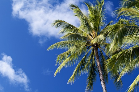 Palm Tree with Clouds Stock Photo - 8458701