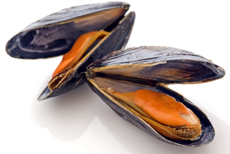mussels: Common Mussel