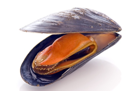 the common: Common Mussel
