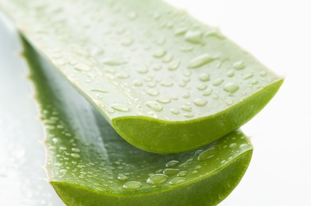 Aloe Vera Leaves with Water Drops Stock Photo - 8487334