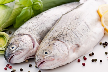 Rainbow Trout Stock Photo - 9539692