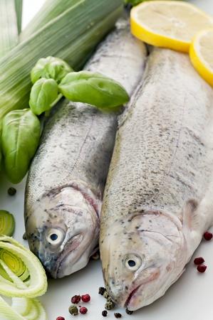 Rainbow Trout Stock Photo - 9539867