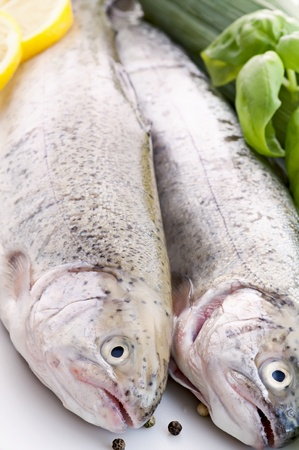 Rainbow Trout Stock Photo - 9641739
