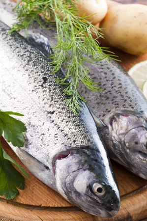 Rainbow Trout Stock Photo - 9797078