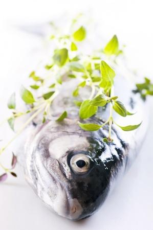 Rainbow Trout Stock Photo - 9796875