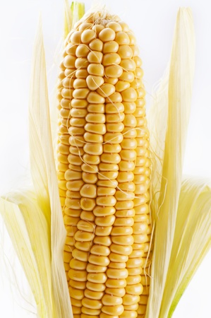 zea: corncob Stock Photo
