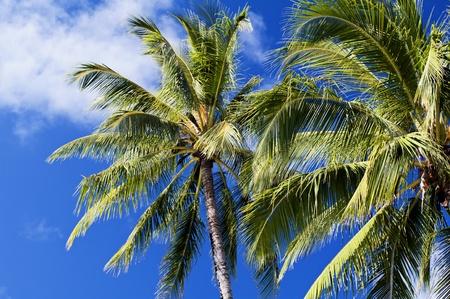 long haul journey: Palm Tree in Wind Stock Photo