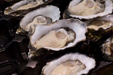 shucked: Rock Oysters
