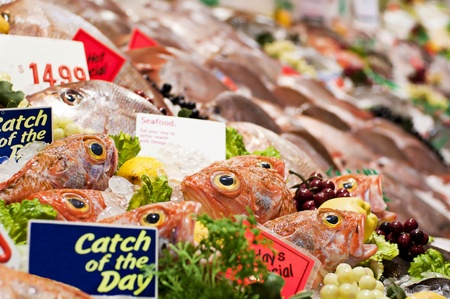 silver perch: Ocean Pearch at the Fish Market Stock Photo