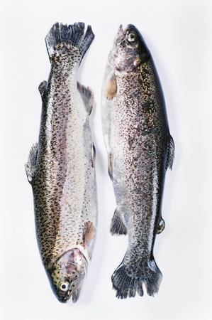 two trouts on the white background photo