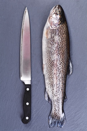 rainbow trout with knife  photo