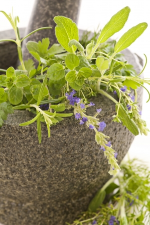 Fresh herbs in mortar photo