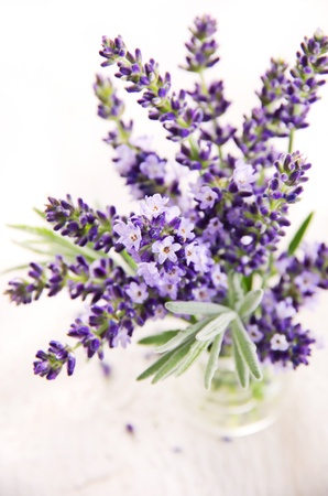 lavender Stock Photo - 14868046