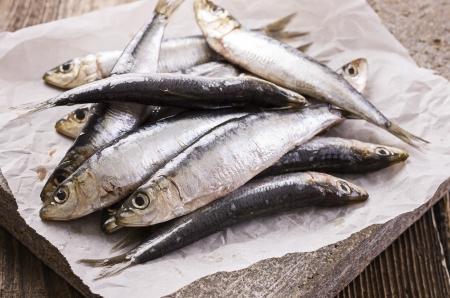 anchovy fish: sardina