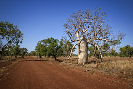 Outback Track at the Kimberlays - Western Australia