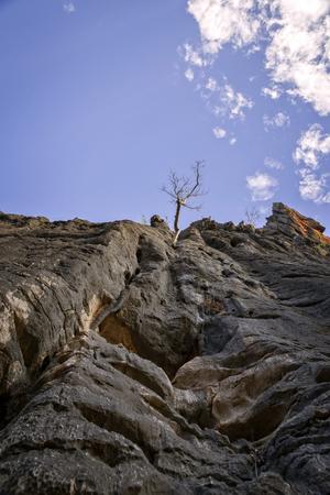 나무와 바위 얼굴 스톡 콘텐츠