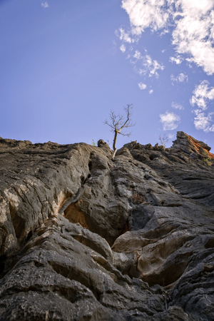 Rock face with tree