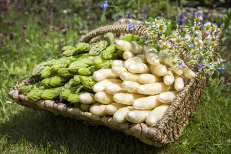 Frischer roher weißer und grüner Spargel als Nahaufnahme in einem Korb im Freien im Gras Standard-Bild - 94523514