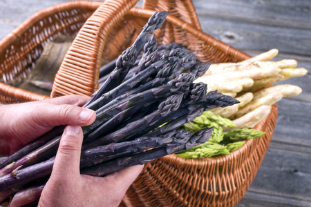 Fresh raw purple asparagus holding in man's hand as close-up